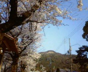桜と大文字山
