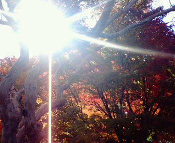 圓光寺の紅葉(3)