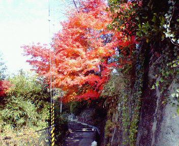 北白川山の紅葉