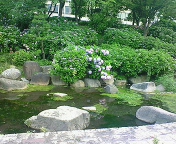 大阪城公園 あじさい・うつぎ園