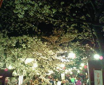 円山公園の夜桜2