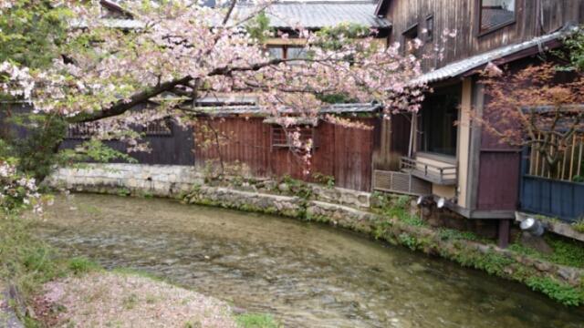 祇園東 巽橋から見た桜