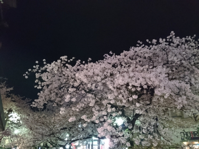 四条小橋の夜桜
