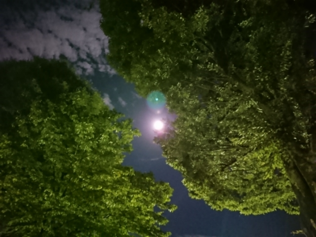 木登りする月 平成二十九年中秋