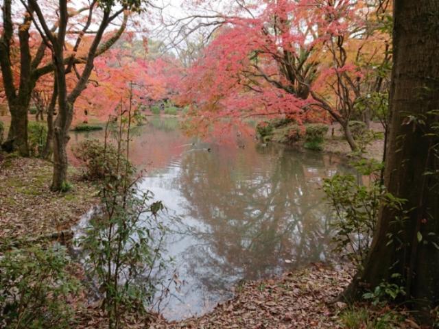 京都府立植物園の紅葉2017(1)