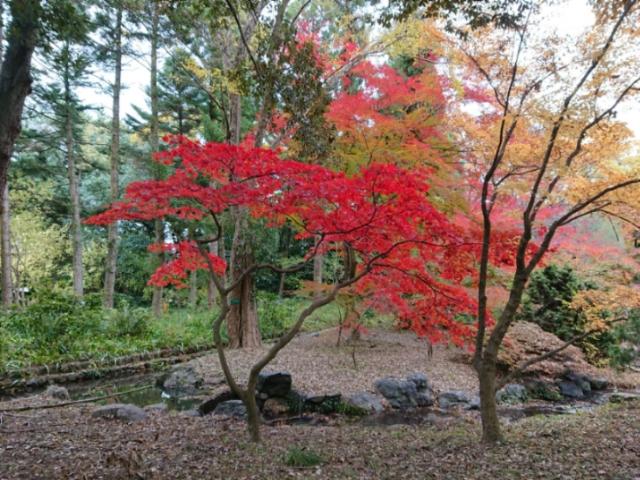 京都府立植物園の紅葉2017(4)