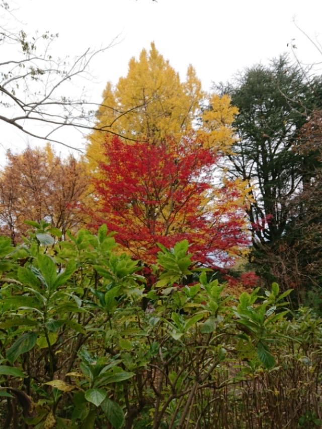京都府立植物園の紅葉2017(5)