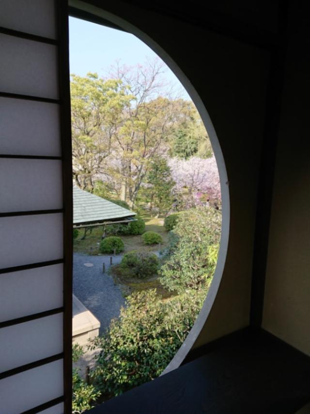 京都 渉成園の桜(4)