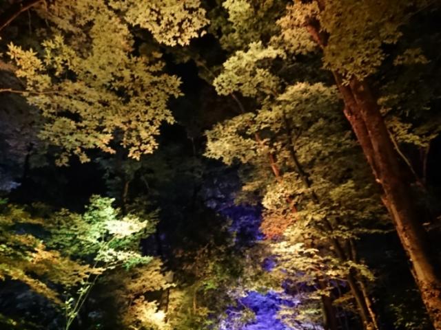 下鴨神社・糺の森 光の祭(4)