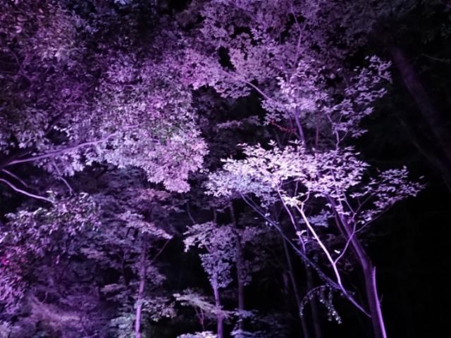 下鴨神社・糺の森 光の祭(5)
