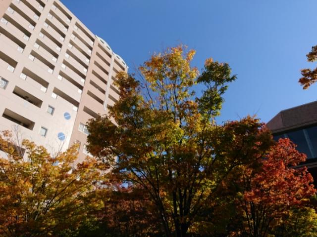 兵庫県西宮市の高松公園で 秋