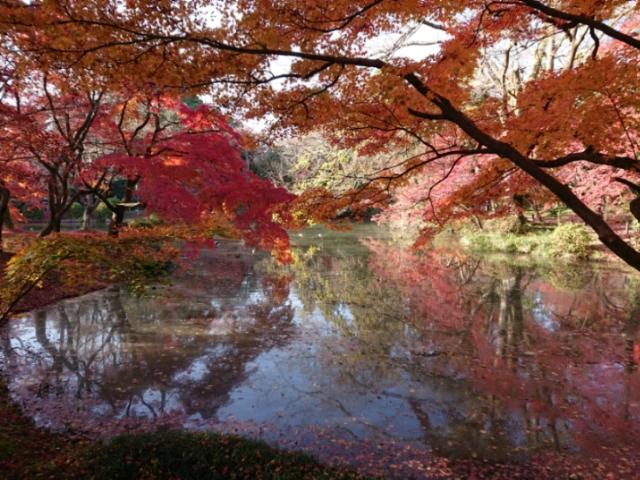 京都府立植物園の紅葉2018・12月