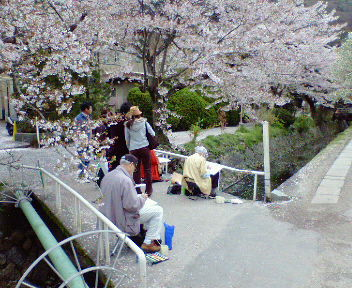 桜を描く人達