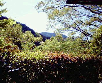 光悦寺から見た天ヶ峰