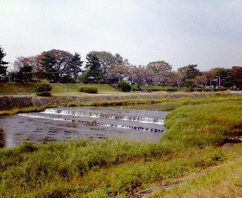 賀茂川での稽古