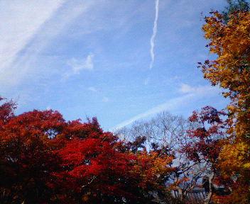 圓光寺の紅葉(6)