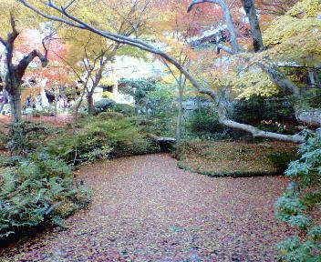 圓光寺の紅葉(7)