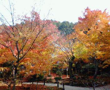 圓光寺の紅葉(8)