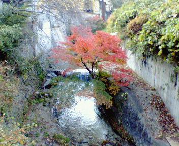 紅葉と白川