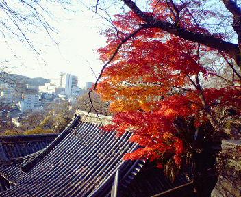 紀三井寺の紅葉