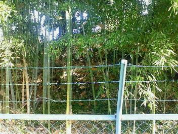 山科本願寺土塁跡(3)