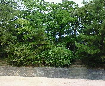 堀跡から有岡城本丸跡を見る