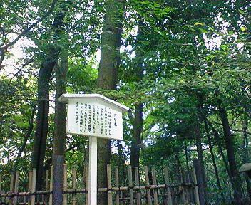 明治神宮 代々木