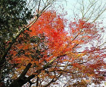詩仙堂の紅葉2007(11)
