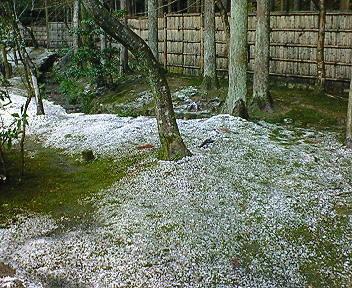 雪の銀閣寺 苔の庭