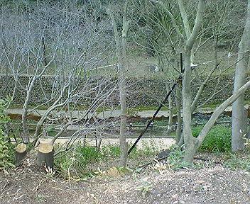 北野御土居の上から見た紙屋川