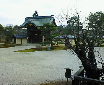 大覚寺 左近の梅
