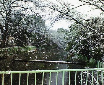 雪の木2008
