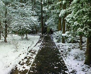 雪の法然院境内(2)