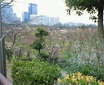 大阪城梅林遠景