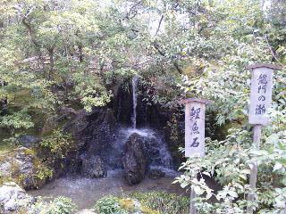 雪の鹿苑寺(<br />  金閣寺)その16  龍門の滝と鯉魚石