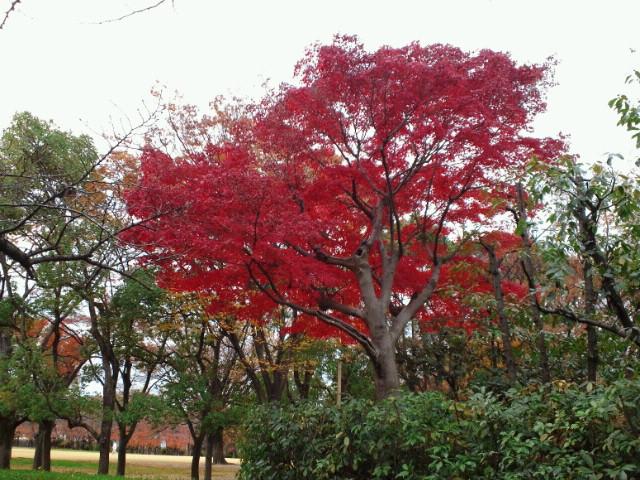 大阪城の紅葉4