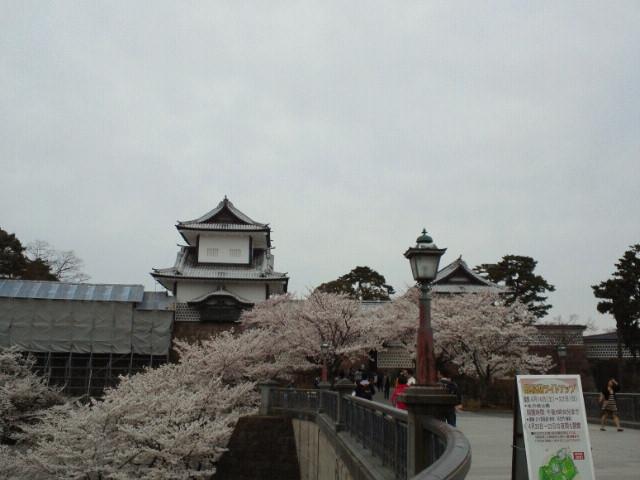 石川門と石川橋と桜