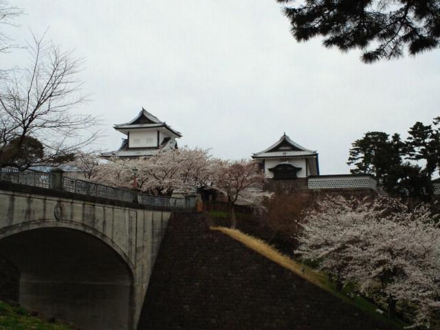 金沢城石川門と桜