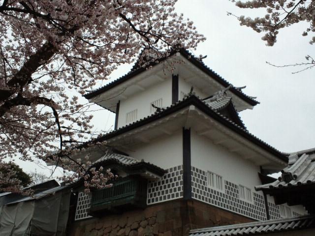 石川門櫓と桜
