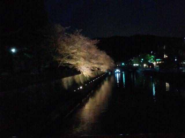 名残の桜(10) <br /> 琵琶湖疎水の夜桜