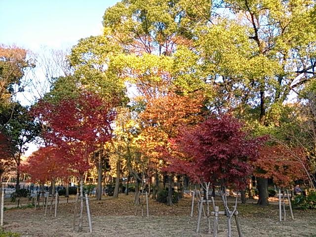 晩秋・大阪城公園の紅葉
