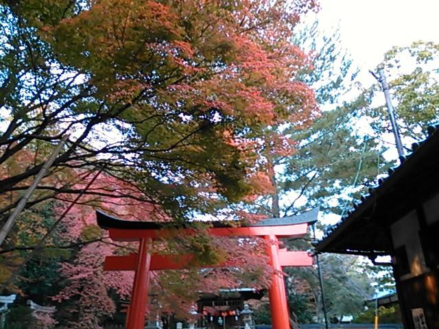 竹中稲荷神社の紅葉2014