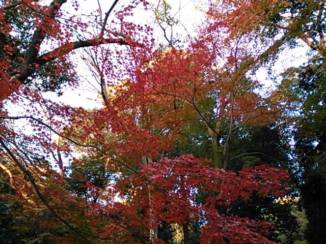 糺の森の紅葉2014
