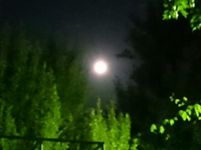中秋の名月と緑