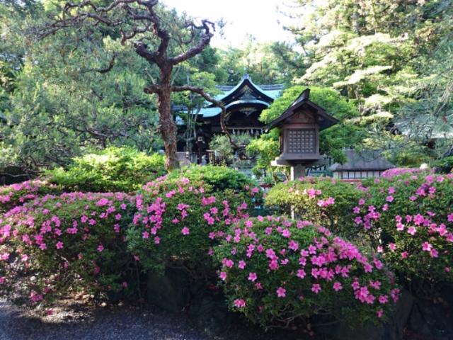 躑躅咲く岡崎神社
