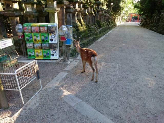 春日大社参道にて 鹿