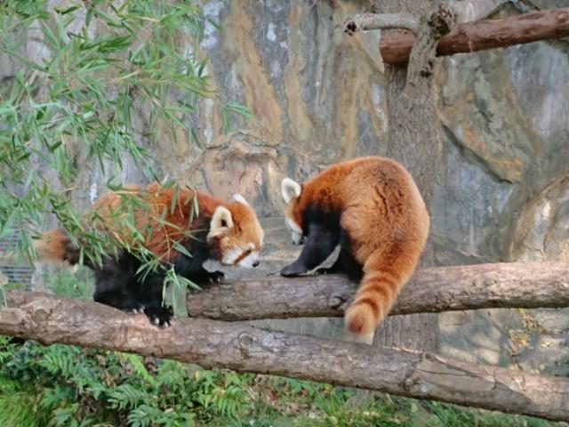 野毛山動物園にて(2)