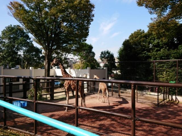 野毛山動物園にて(3)