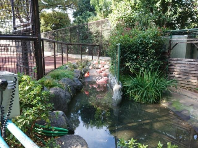野毛山動物園にて(4)