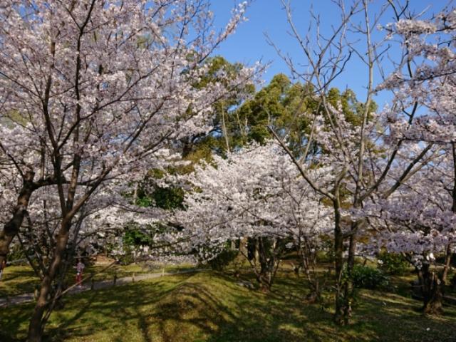 京都 渉成園の桜(2)
